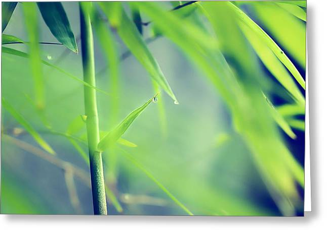 Matsu Greeting Cards - Morning dew in bamboo forest Greeting Card by Hakai Matsu