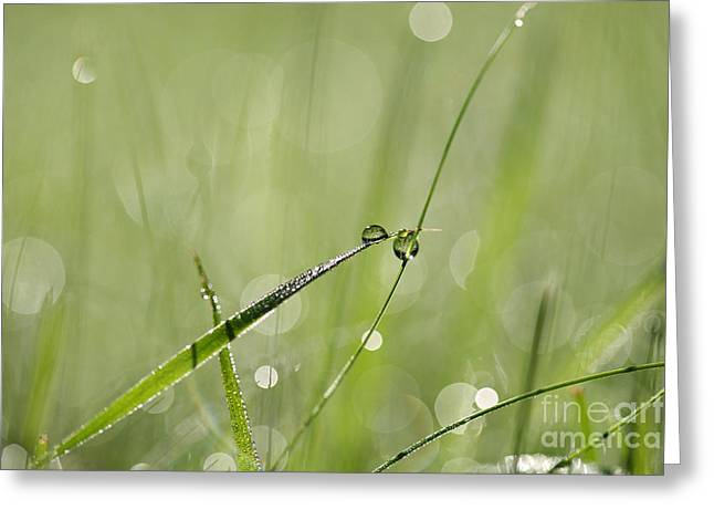 Green Blade Of Grass Greeting Cards - Morning dew Greeting Card by Jana Behr
