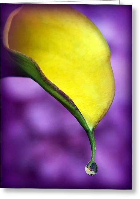 Morning Dew Greeting Card by Karen Wiles