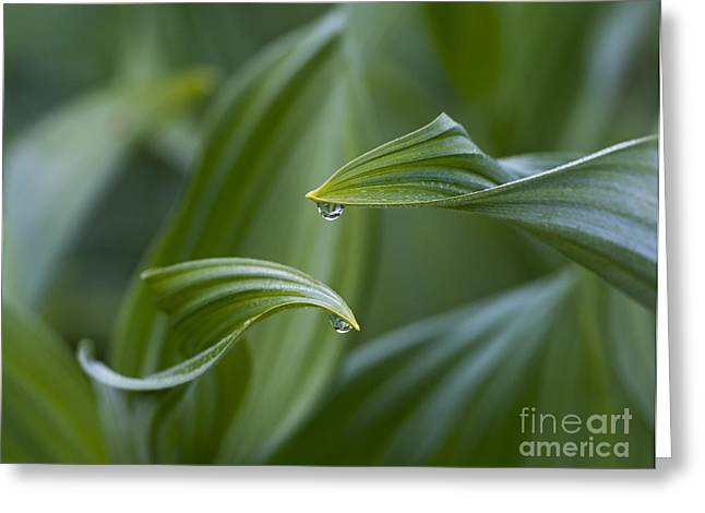 Morning Dew Greeting Cards - Morning Dew Greeting Card by Mike Dawson