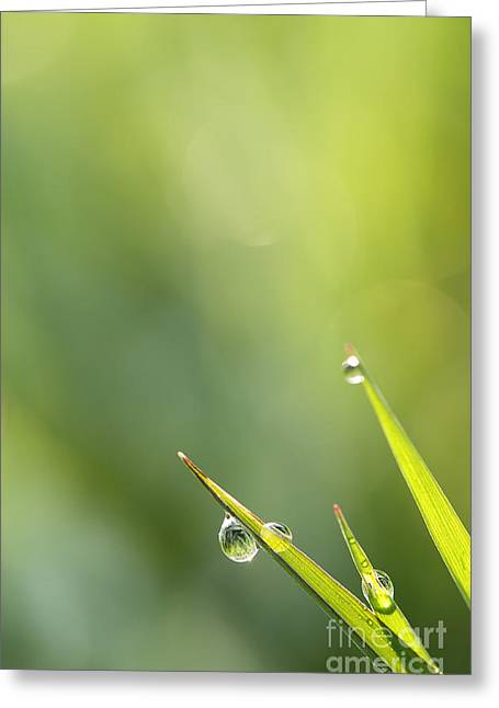 Morning Dew On Grass Greeting Card by LHJB Photography