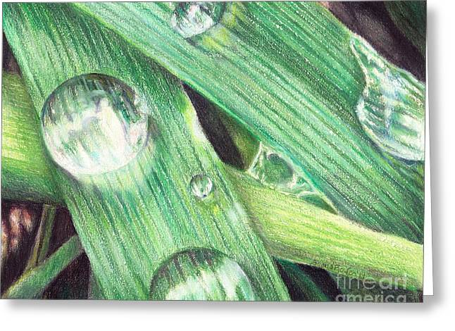 Fresh Green Drawings Greeting Cards - Morning Dew Greeting Card by Shana Rowe