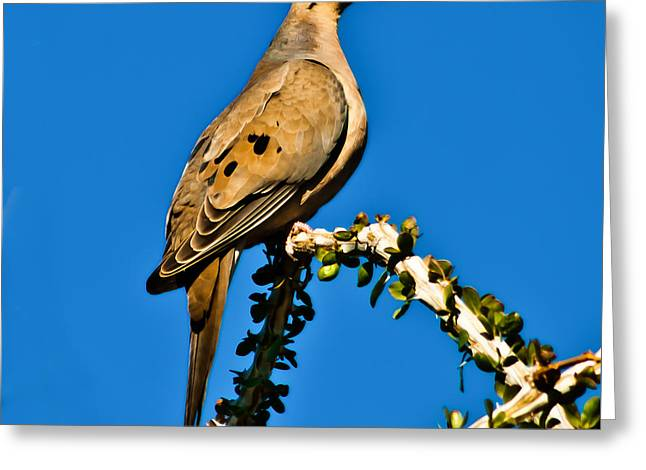 Haybales Greeting Cards - Morning Dove Greeting Card by Robert Bales
