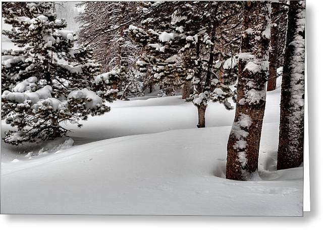 Blizzard Scenes Greeting Cards - Morning Drifts Greeting Card by Steven Reed