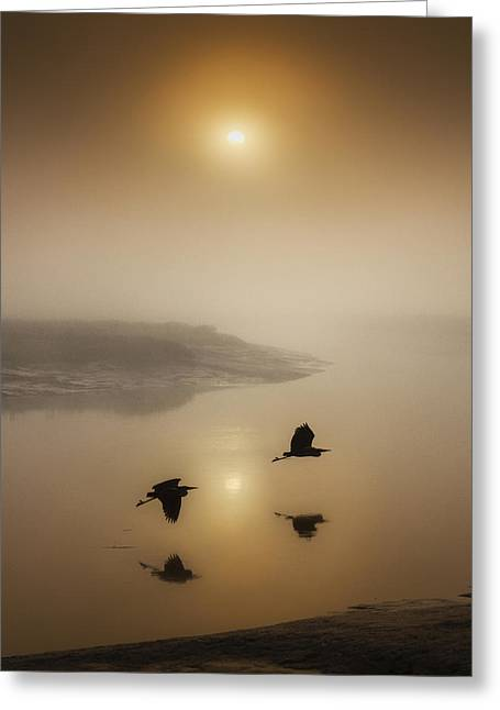 Muted Mauve Greeting Cards - Morning Duet Greeting Card by Adrian Campfield