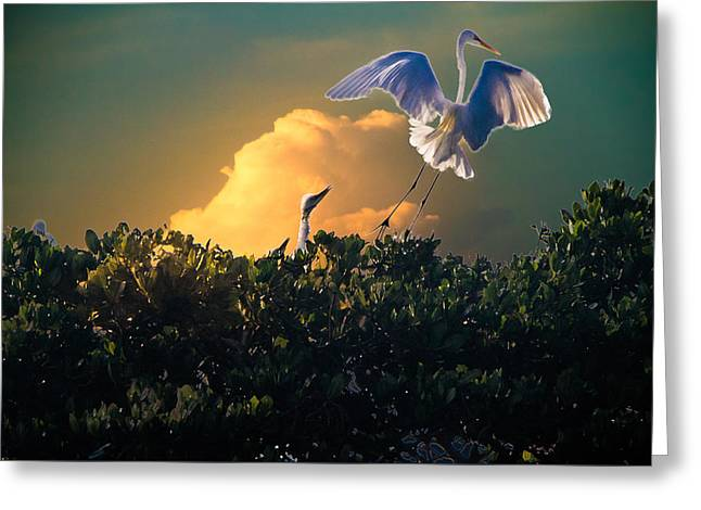 Feeding Birds Greeting Cards - Morning Egret Greeting Card by Ches Black