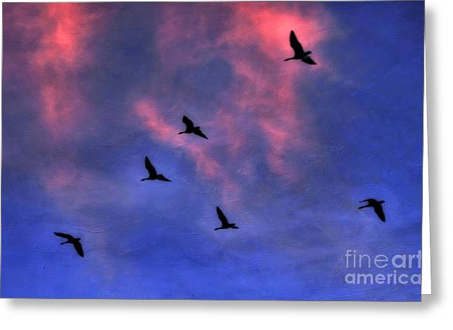 Flock Of Geese Greeting Cards - Morning Flight Greeting Card by Darren Fisher