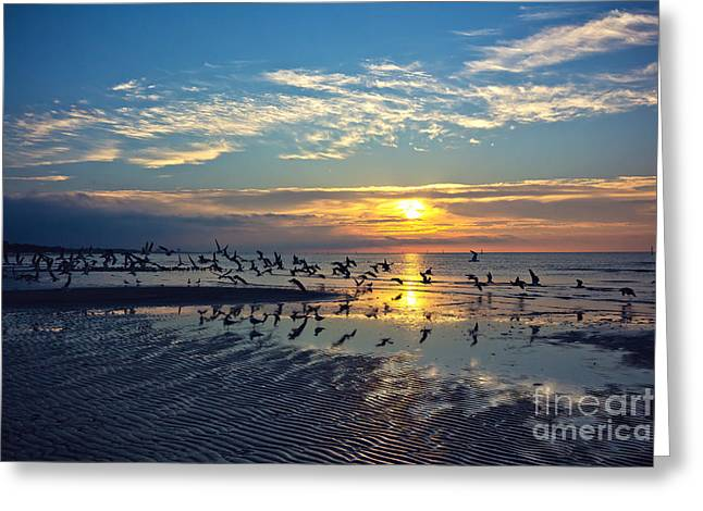 Mississippi Gulf Coast Greeting Cards - Morning Flight Greeting Card by Joan McCool