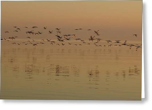 Morning Flight Greeting Card by John Wall