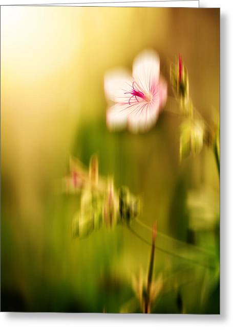 Light Magnifications Greeting Cards - Morning Flower Greeting Card by Lane Erickson