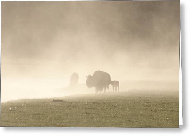 Wyoming Wildlife Greeting Cards - Morning Fog Buffalo Greeting Card by Dan Sproul