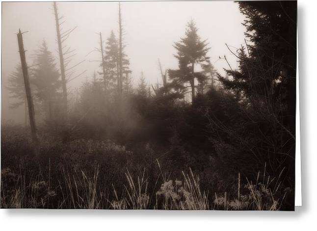 Clingmans Dome Greeting Cards - Morning Fog In The Smoky Mountains Greeting Card by Dan Sproul