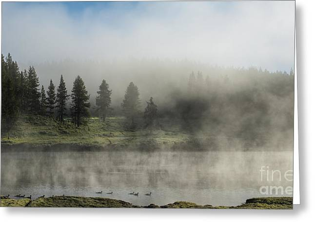 Morning Fog on the Yellowstone Greeting Card by Sandra Bronstein