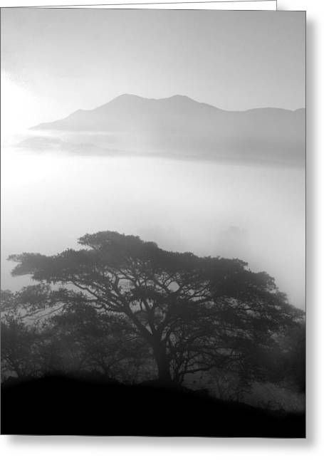Mexico Greeting Cards - Morning Fog Greeting Card by Tod Ramey