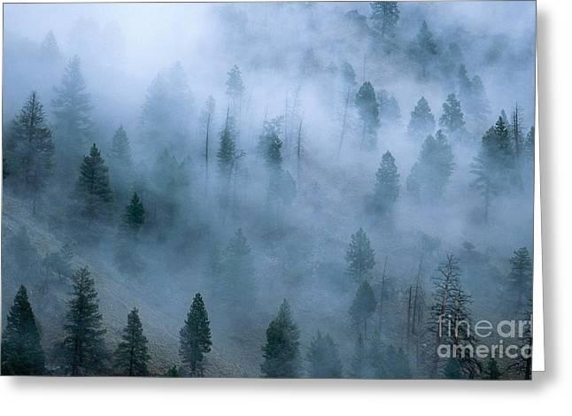 Morning Fog Greeting Card by William H. Mullins