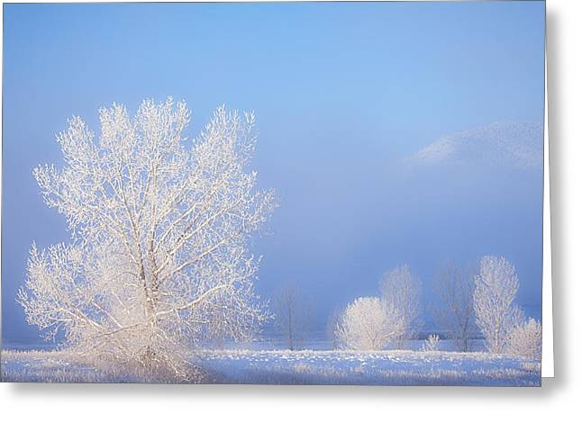 Winter Prints Greeting Cards - Morning Frost Greeting Card by Darren  White