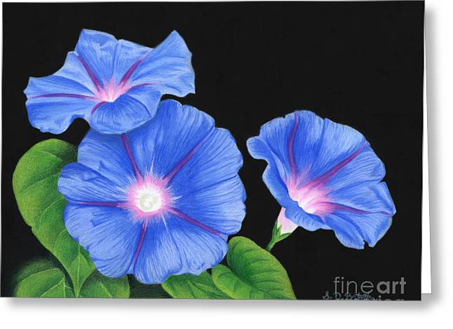 Photo Realism Drawings Greeting Cards - Morning Glories On Black Greeting Card by Sarah Batalka