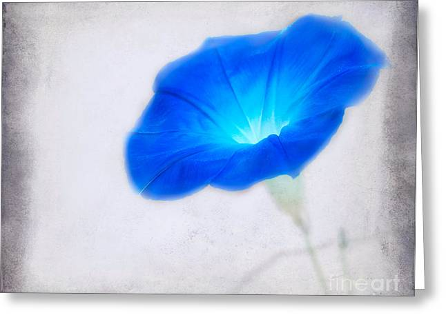 Floral Photographs Digital Greeting Cards - Morning Glory Greeting Card by Betty LaRue