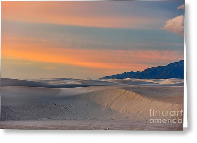 Morning Glory In White Sands Greeting Card by Sandra Bronstein
