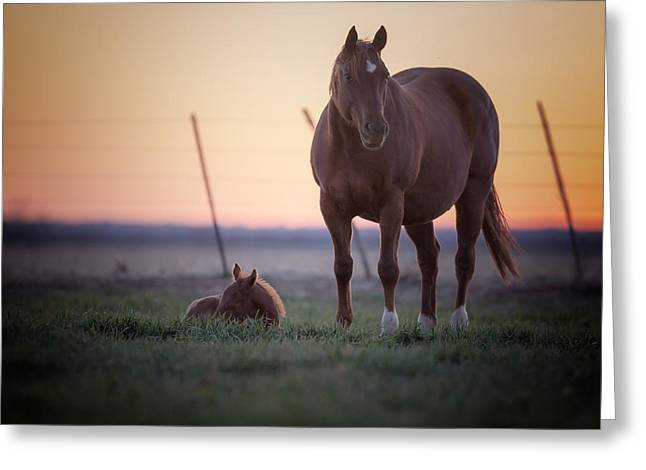Quarter Horses Greeting Cards - Morning Glory Greeting Card by Kelli Brown
