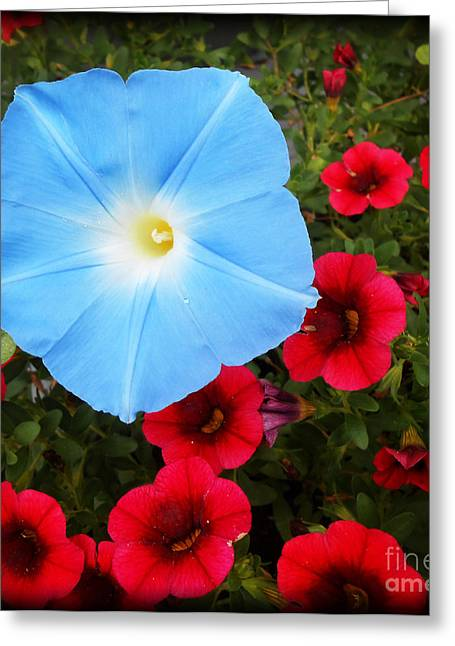 Whiteoaks Photography Greeting Cards - Morning Glory Magic Greeting Card by Eva Thomas
