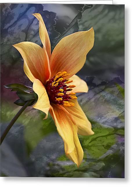 Barbara Smith Greeting Cards - Morning Glow Greeting Card by Barbara Smith