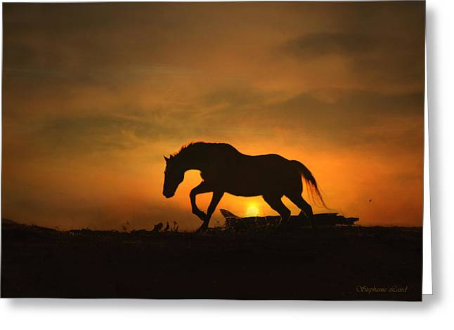 Beautiful Horse Photography Greeting Cards - Morning Glow Greeting Card by Stephanie Laird