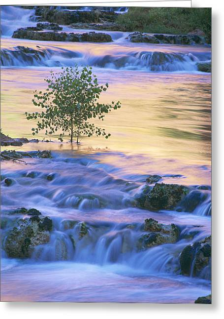 Reflection In Water Greeting Cards - Morning Glow Greeting Card by Timm Chapman