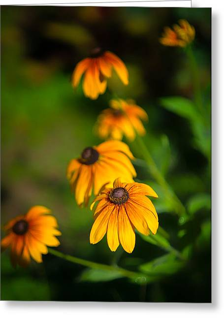 Orange Wildflower Greeting Cards - Morning Gold Greeting Card by Joseph Smith