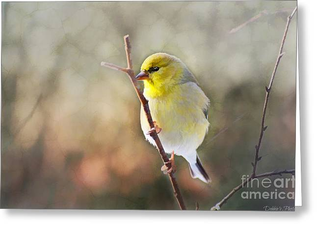 Goldfinch Digital Art Greeting Cards - Morning Goldfinch - Digital Paint I Greeting Card by Debbie Portwood