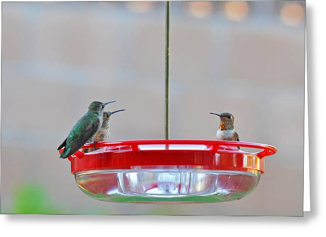 Migrating Hummingbird Greeting Cards - Morning Gossip Greeting Card by Lynn Bauer