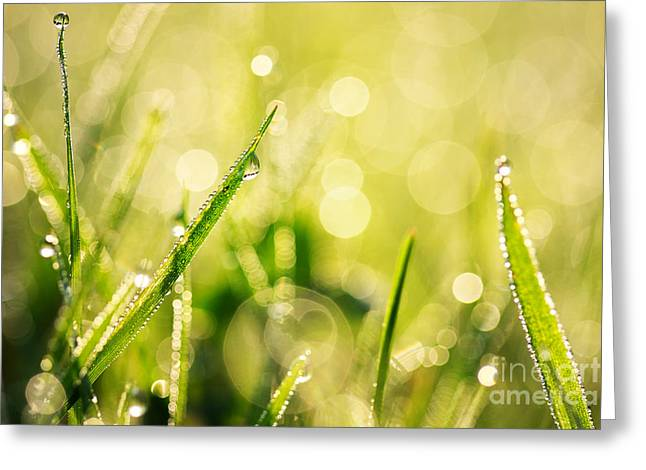 Green Blade Of Grass Greeting Cards - Morning grass Greeting Card by Jana Behr