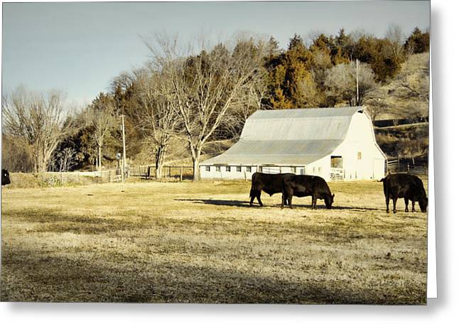 Hartsburg Greeting Cards - Morning Graze Greeting Card by Cricket Hackmann