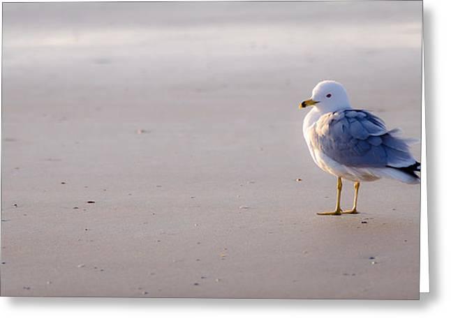 Morning Gull Greeting Card by Kelly McNamara