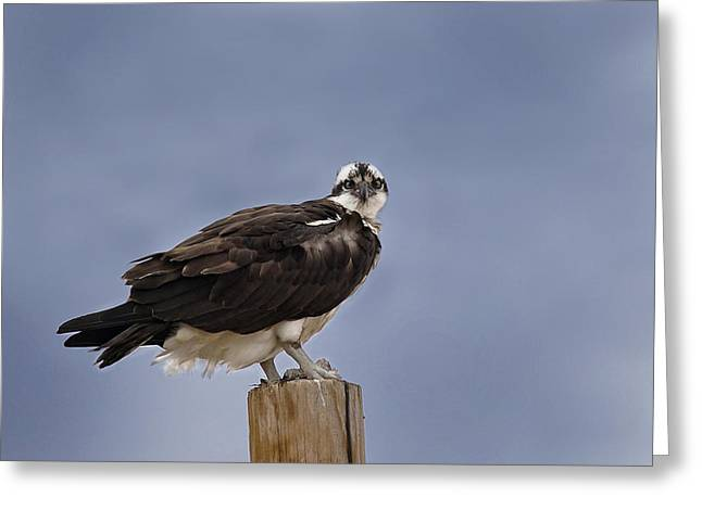 Portrait With Mountain Greeting Cards - Morning Hunting Greeting Card by Betty Depee