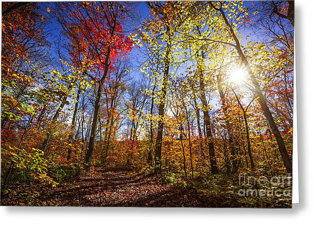 Fallen Leaf Greeting Cards - Morning in autumn forest Greeting Card by Elena Elisseeva