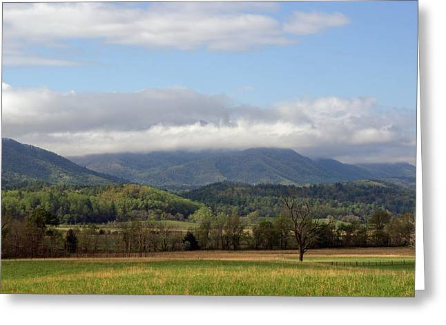 Morning In Cades Cove Greeting Card by Roger Potts