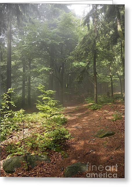 Twinkle Greeting Cards - Morning In The Forest Greeting Card by Michal Boubin