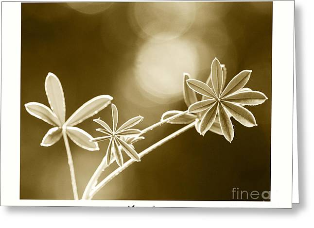 Morning Greeting Card by Artist and Photographer Laura Wrede