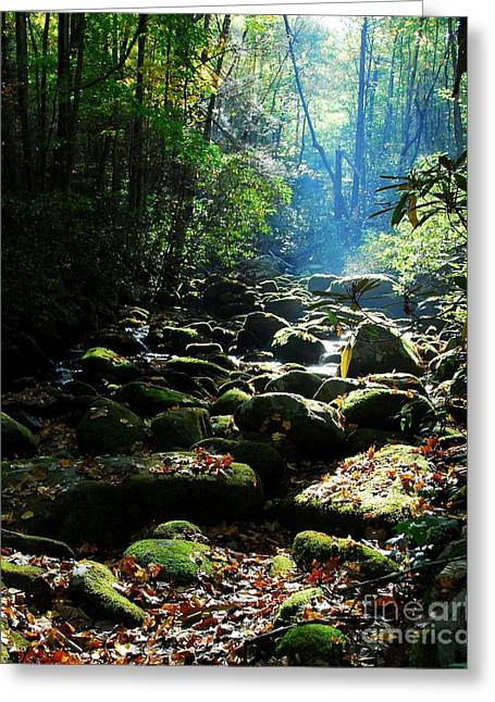 Fallen Leaf Greeting Cards - Morning Light 2 Greeting Card by Mel Steinhauer