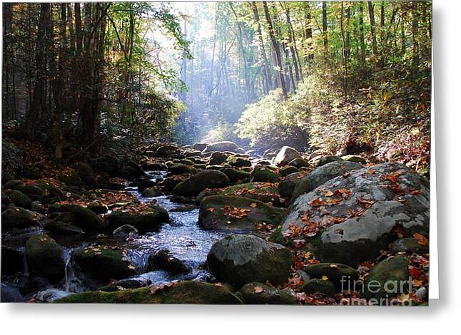 Moss Green Greeting Cards - Morning Light 3 Greeting Card by Mel Steinhauer