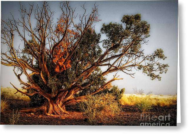Knotty Greeting Cards - Morning Light Greeting Card by Arne Hansen