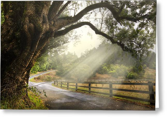 Morning Light Greeting Card by Debra and Dave Vanderlaan