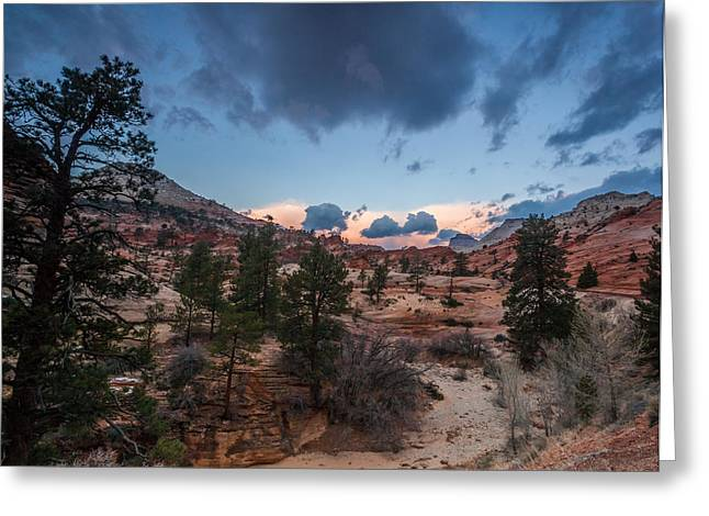 Arches National Park Pine Trees Greeting Cards - Morning Light in a Zion Wash Greeting Card by Bruce Siulinski