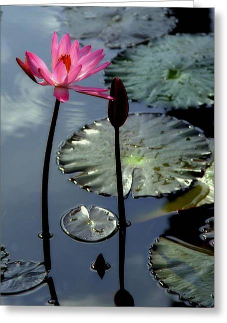 Water Lilly Greeting Cards - Morning Light Greeting Card by Karen Wiles