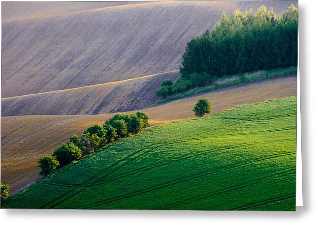 Moravia Greeting Cards - Morning Light Greeting Card by Marta Grabska-Press
