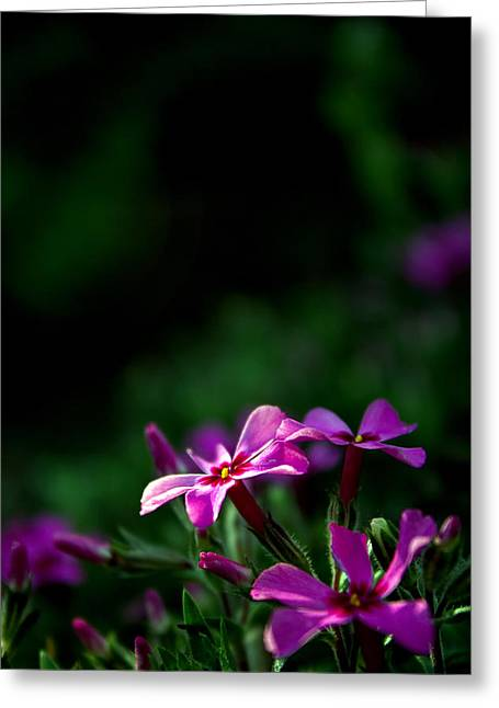 Indiana Flowers Greeting Cards - Morning Light Greeting Card by Michael Huddleston