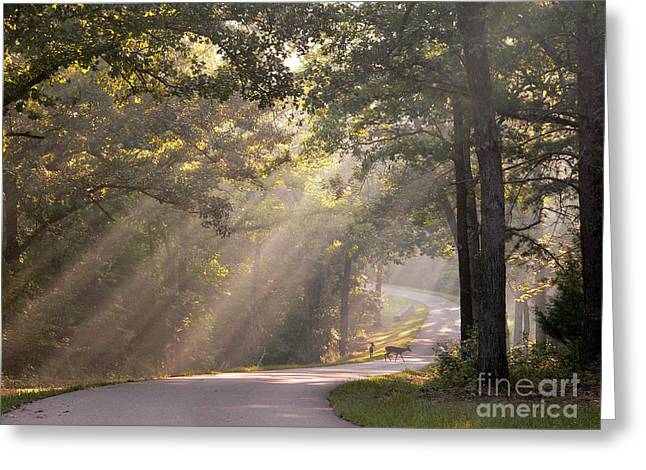 Light Shaft Greeting Cards - Morning Light with Fawn and Doe Greeting Card by David Bearden