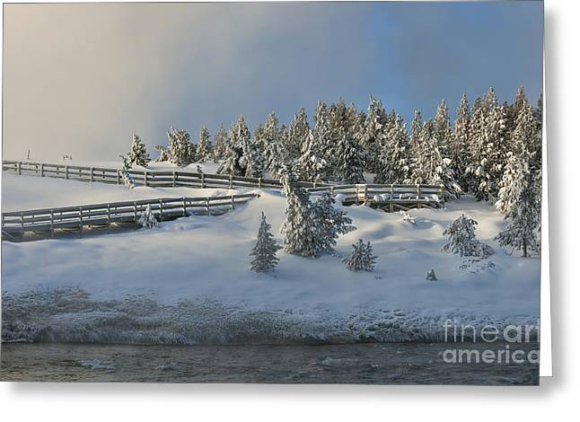 Hoar Frost Greeting Cards - Morning Majesty Greeting Card by Sandra Bronstein