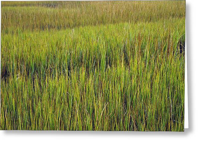 Beach Photographs Greeting Cards - Morning Marsh Grasses on Jekyll Island Greeting Card by Bruce Gourley
